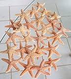 Lot of 25 Sugar Starfish Wedding Decor 2 - 3 Inch