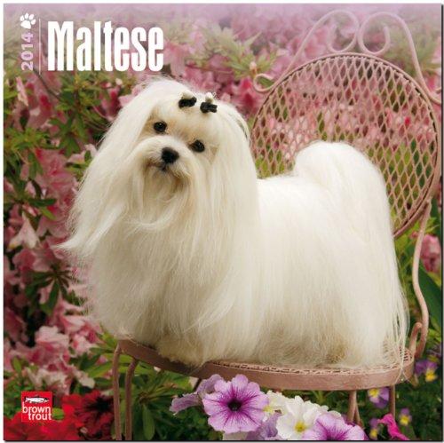 Maltese 2014 - Malteser: Original BrownTrout-Kalender [Mehrsprachig] [Kalender]