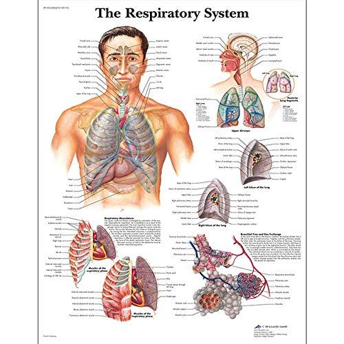 QPOWY Sistema de anatomía Humana Órgano Lienzo Arte Cartel Impresión Mapa del Cuerpo Lienzo Cuadros de Pared para educación médica Decoración para el hogar70X90Cm