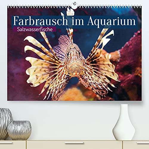 Farbrausch im Aquarium: Salzwasserfische (Premium, hochwertiger DIN A2 Wandkalender 2021, Kunstdruck in Hochglanz)