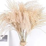 50PCS flores secas Pampas Grass,secos Reed Bundle Ramo de flores secas decoración Pequeña hierba de pampa Phragmites communis Natural Pampas Grass Manojo de la flor de la sala de bodas Fotografiar