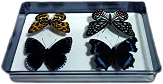 Bug Display Box,Insect Display Case with Pinning Board,8.2 x 2 x 5.9 Inches