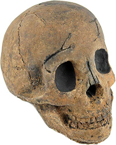 Myard Fireproof Imitated Human Fire Pit Skull Gas Log for NG, LP Wood Fireplace, Firepit, Campfire, Halloween Decor, BBQ (Brown...
