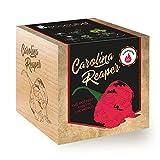 Feel Green Ecocube Chili Carolina Reaper, Schärfegrad: 10+, Scoville: 2.2 Millionen, Nachhaltige...
