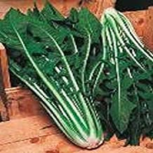 San Pasquale Chicory Seeds - Very flavorful with a tangy taste. from Italy. !!(50 - Seeds)