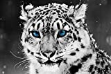YISUMEI 60' x 80' Blanket Comfort Warmth Soft Plush Throw for Couch Snow Leopard