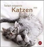 Tierisch entspannte Katzen Postkartenkalender. Postkartenkalender 2020. Monatskalendarium. Spiralbindung. Format 16 x 17 cm
