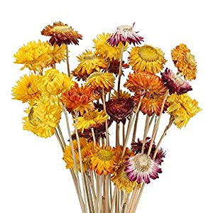 NAHUAA Dried Flowers Natural Dried Daisy Flowers Bouquet 15-20 Pcs Artificial Daisies Flowers Table Centerpieces Arrangements for Home Kitchen DIY Wedding Spring Decorations