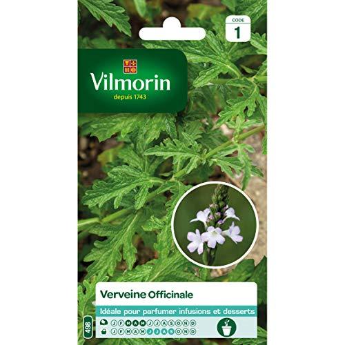 Vilmorin - Sachet de graines Verveine Officinale