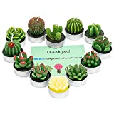 AMASKY Handmade Delicate Succulent Cactus Candles for Birthday Party Wedding Spa Home Decoration(12 Packs(2))