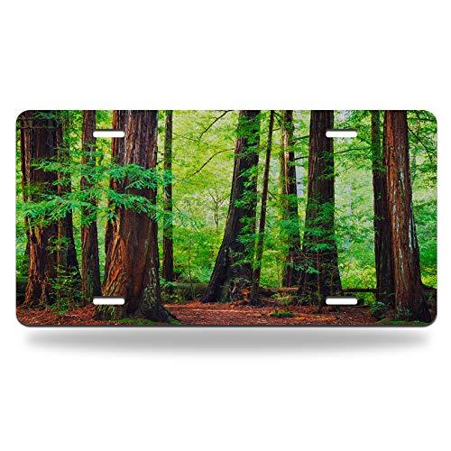 Beabes Redwood Trees Forest License Plate Vintage Huge Rain Redwood Tree Green Leaf Nature Landscape Durable Mental Car Plate Vanity Tag Aluminum Novelty for Men Woman 6 X 12 Inch