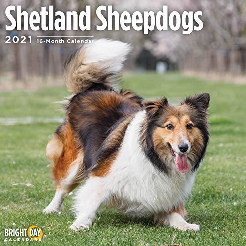 2021 Shetland Sheepdogs Wall Calendar by Bright Day, 12 x 12 Inch,...