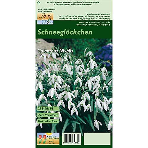 Florado 25x Kleines Schneeglöckchen Blumenzwiebeln, Zwiebelblume, Garten Balkon, Blumen Schnittblumen, Bienen Hummeln, Größe 4/5
