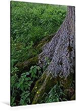 Premium textil kanvas 80 x 120 cm hög, september: I skuggan av de starka rötterna blommar så många krus.   Väggbild, bild ...