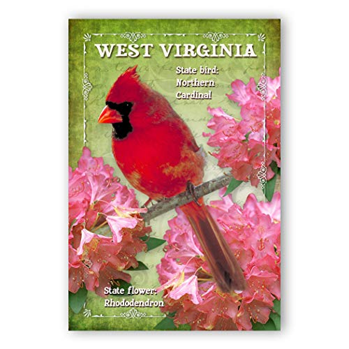 WEST VIRGINIA BIRD AND FLOWER postcard set of 20 identical postcards. WV state symbols post cards. Made in USA.