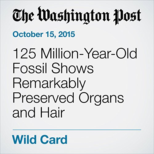 125 Million-Year-Old Fossil Shows Remarkably Preserved Organs and Hair audiobook cover art