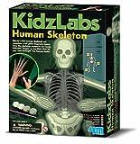 4M Kidz Labs Human Skeleton Play Set