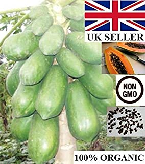 AGROBITS fruits DRYof Swe papaye  100  biologique  NON OGM  Royaume-Uni LER