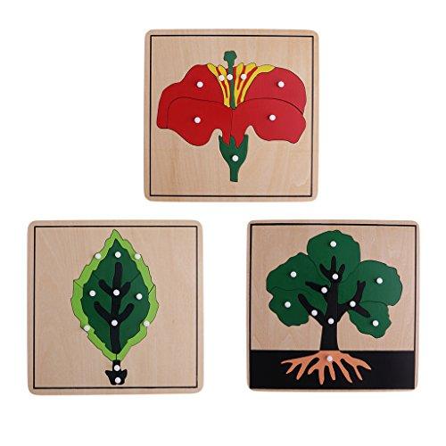 Puzzles  Montessori Partes De La Flor