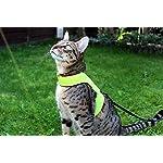 Cat Harness Mynwood Cat Jacket/Harness High Viz Kitten up to 8month – Escape Proof
