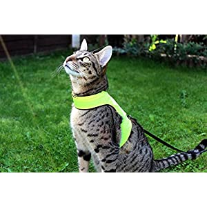 Mynwood Cat Jacket/Harness High Viz Kitten up to 8month