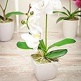 Faux Fiore White Orchid - White Pot - Faux Plants - 13.4' - 1ct Box - Restaurantware