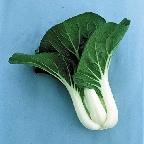 Kings Seeds - Oriental - Pak Choi Joi Choi F1-125 graines