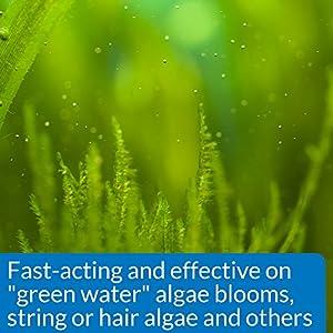 API ALGAEFIX Algae Control 16-Ounce Bottle