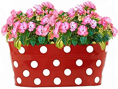 Kraft Seeds Designer Oval Shaped Planters. (Oval - Multicolored Variety Available - Green, Yellow, Orange, Blue and Red.) Useful for Balcony and Home Gardening (Pack of 3)