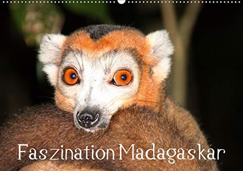 Faszination Madagaskar (Wandkalender 2021 DIN A2 quer)