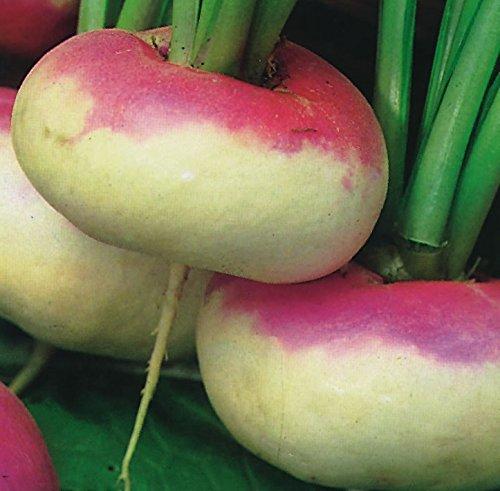 Suffolk Herbes - Navet Bio Top Violet Milan - 500 graines