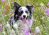 Edition Seidel Hunde Premium Kalender 2020 DIN A3 Wandkalender Hundekalender