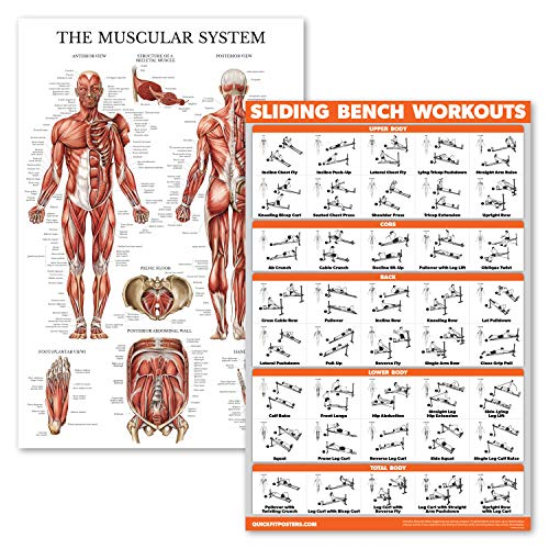 2 Pack - Muscular System Anatomical Poster + Sliding Bench Exercise Workout Chart (Compatible with Total Gym, Weider Ultimate Body Works)