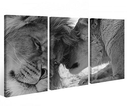 Preisvergleich Produktbild Leinwand 3 tlg. Afrika Löwe schwarz weiß Love Tier Liebe Bilder Wandbild 9A562 Holz-fertig gerahmt -direkt Hersteller,  3 tlg BxH:120x80cm (3Stk 40x 80cm)