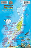 Palau Dive Map & Reef Creatures Guide Franko Maps Laminated Fish Card