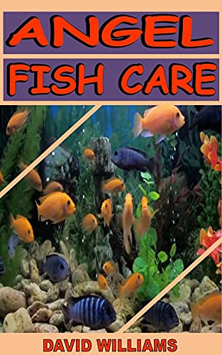 ANGEL FISH CARE: Everything you need to Know about taking care of Angelfish (English Edition)