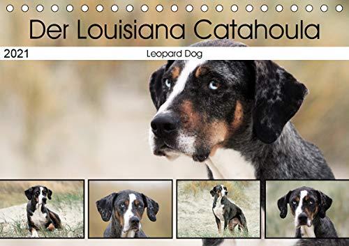 Der Louisiana Catahoula Leopard Dog (Tischkalender 2021 DIN A5 quer)
