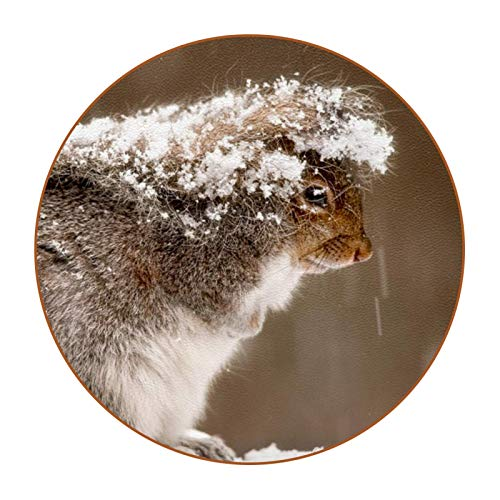 Coasters for Drinks Snowflake Animal Squirrel Designed Drink Coasters, (4.3 Inch, Round), Super Heat-Resistant Double-sided non-slip Coasters for Drinks, Great Housewarming Gift Set of 6