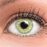 GLAMLENS Lenti a contatto colorate verdi Light Green - mensili - con porta lenti a contatt...