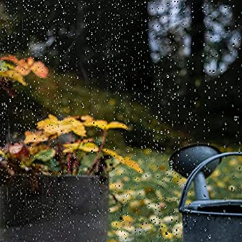 30 Stress Relieving Rain Sounds from Nature