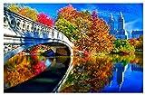 TTbaoz Rompecabezas de 1000 Piezas, Imagen de ensamblaje de Papel, póster de Central Park de Nueva York, Juegos para Adultos, Juguetes educativos, 38 * 26 cm