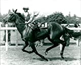 Tryptych Racehorse - Vintage Press Photo