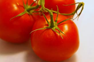 cold hardy tomatoes