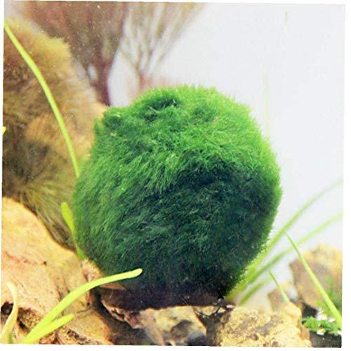 Case Cover Safe Dekoration Aquarium Live-Moss Ball, natürlicher Lebensraum <br> für lebende Fische, Haustier Shrimp