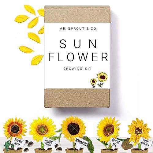 Sunflower Seed Starter Kit