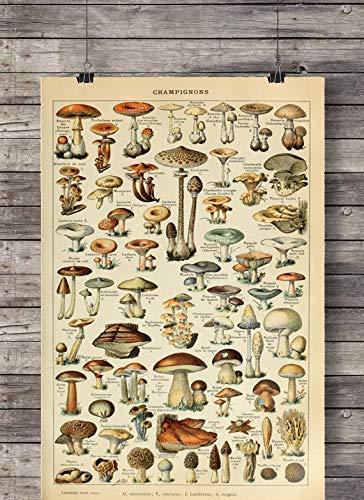 Poster Bild Champignons Pilze Vintage A3 ohne Rahmen