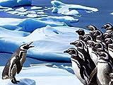 5D DIY pingüino punto de cruz mosaico diamante bordado Animal decoración del hogar diamante pintura A4 50x70cm