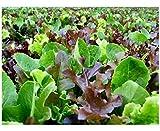 Premier Seeds Direct ORG063 - Semillas para Verduras...