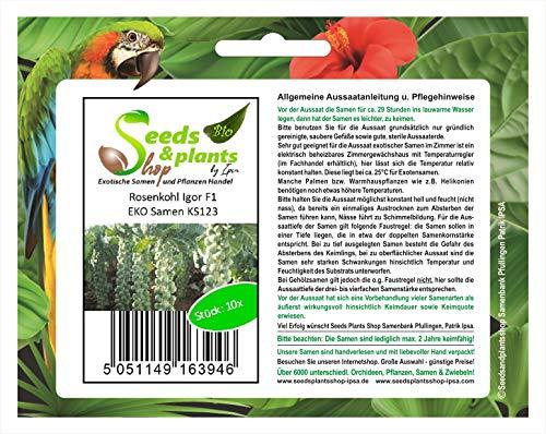 Stk - 10x Rosenkohl Igor F1 EKO - Samen Gemüse Garten Küche Pflanze KS123 - Seeds Plants Shop Samenbank Pfullingen Patrik Ipsa