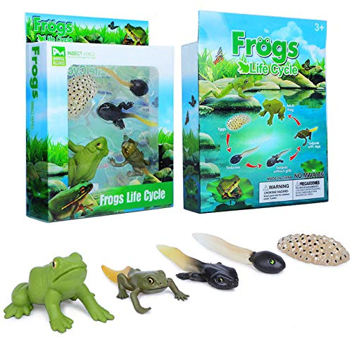 Gemini&Genius Insect Growth Diary Simulation Frog Life Cycle Set Mosquito, Sea Turtle Model and Ant Action & Toy Figures Learning & Educational Children's Toys (Frog)